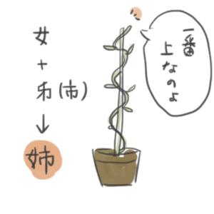 姉という漢字の成り立ちを説明しているイラスト