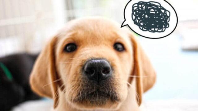 不満がある犬の画像