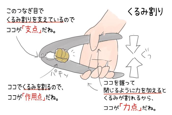 くるみ割りの力点・支点・作用点のイラスト